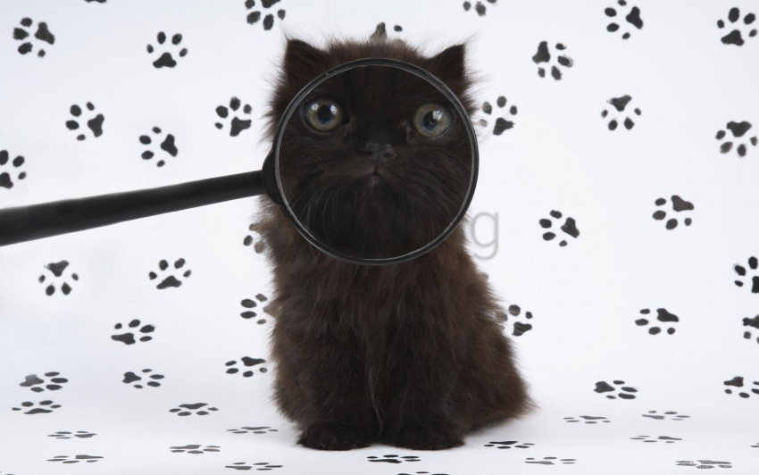 free PNG baby, fluffy, kitten, magnifying glass wallpaper background best stock photos PNG images transparent