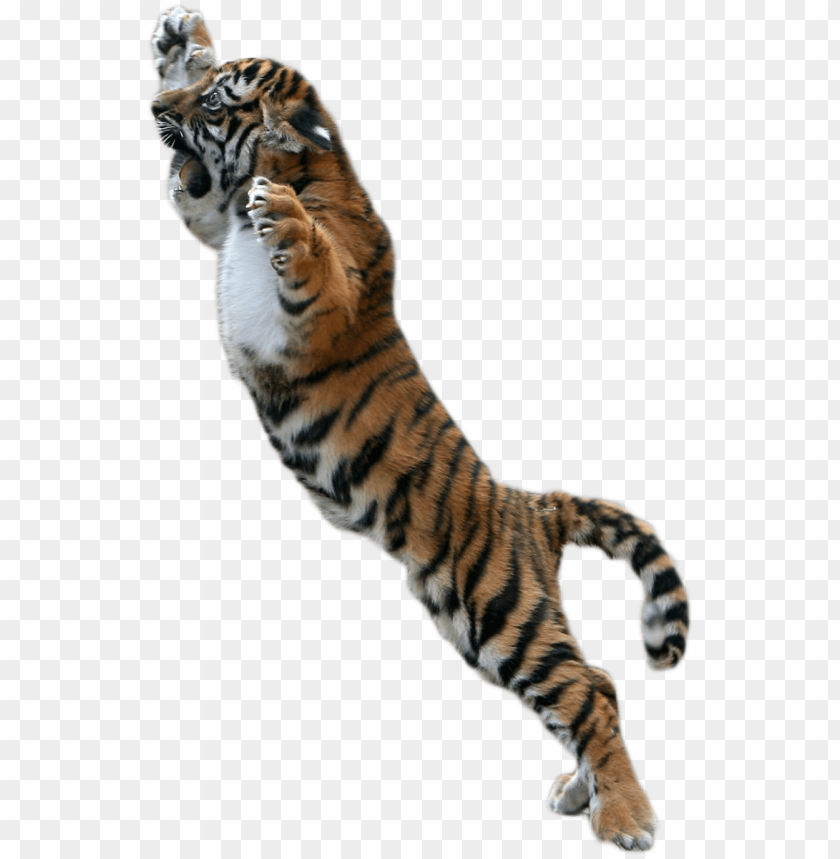 free PNG baby tiger png picture free download - png tiger for picsart PNG image with transparent background PNG images transparent