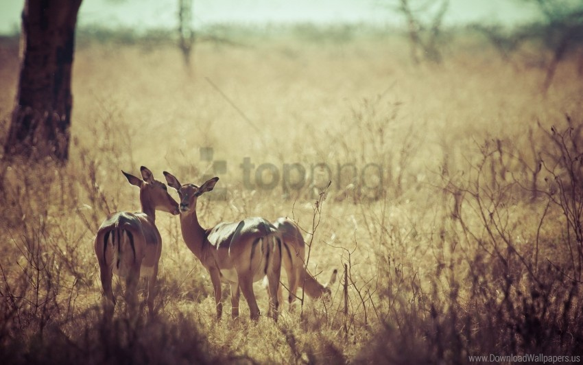 free PNG background, deer, field, grass, nature wallpaper background best stock photos PNG images transparent