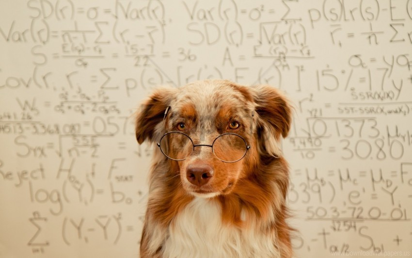 free PNG background, dog, glasses wallpaper background best stock photos PNG images transparent