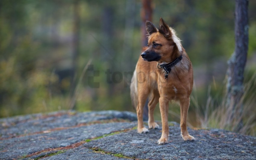 free PNG background, dog, nature wallpaper background best stock photos PNG images transparent