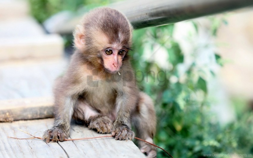 free PNG background, monkey, nature wallpaper background best stock photos PNG images transparent