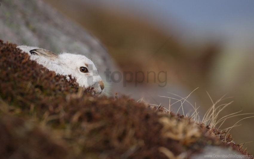 free PNG background, nature, rabbit wallpaper background best stock photos PNG images transparent