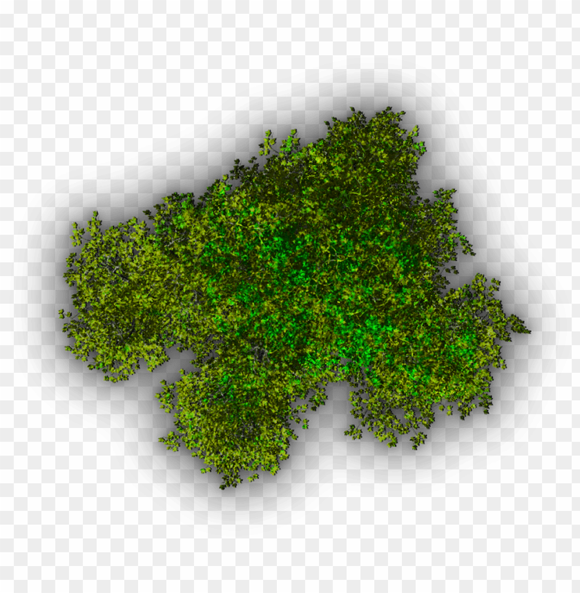 free PNG background top tree - top view tree icon PNG image with transparent background PNG images transparent