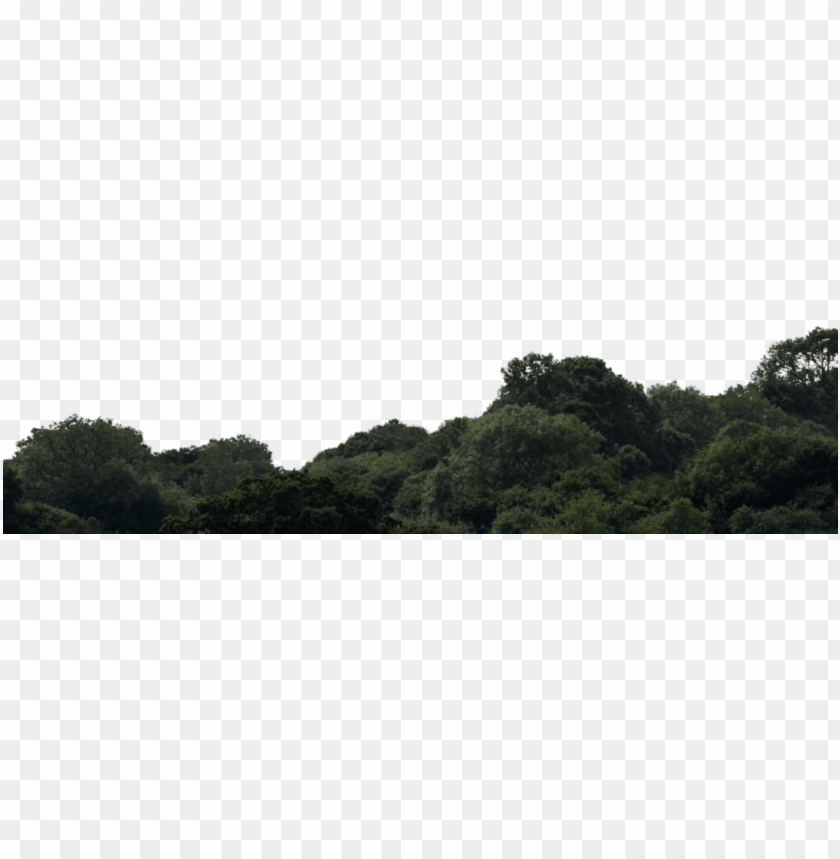 free PNG backgrounds max, forest, mountains - old-growth forest PNG image with transparent background PNG images transparent