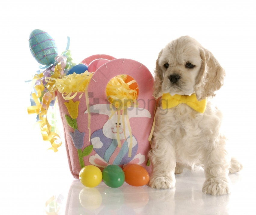 free PNG bag, easter, eggs, puppy, white background wallpaper background best stock photos PNG images transparent