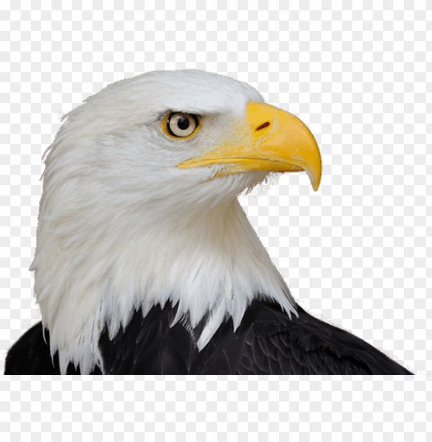 free PNG bald eagle png free download - life size birds: the big book of north american birds PNG image with transparent background PNG images transparent