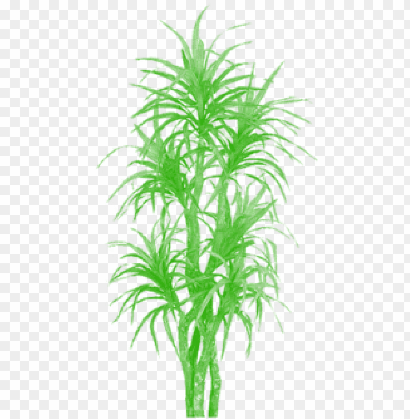 free PNG bamboo tree clipart png, tree png plan, tree png clipart, - palm trees PNG image with transparent background PNG images transparent