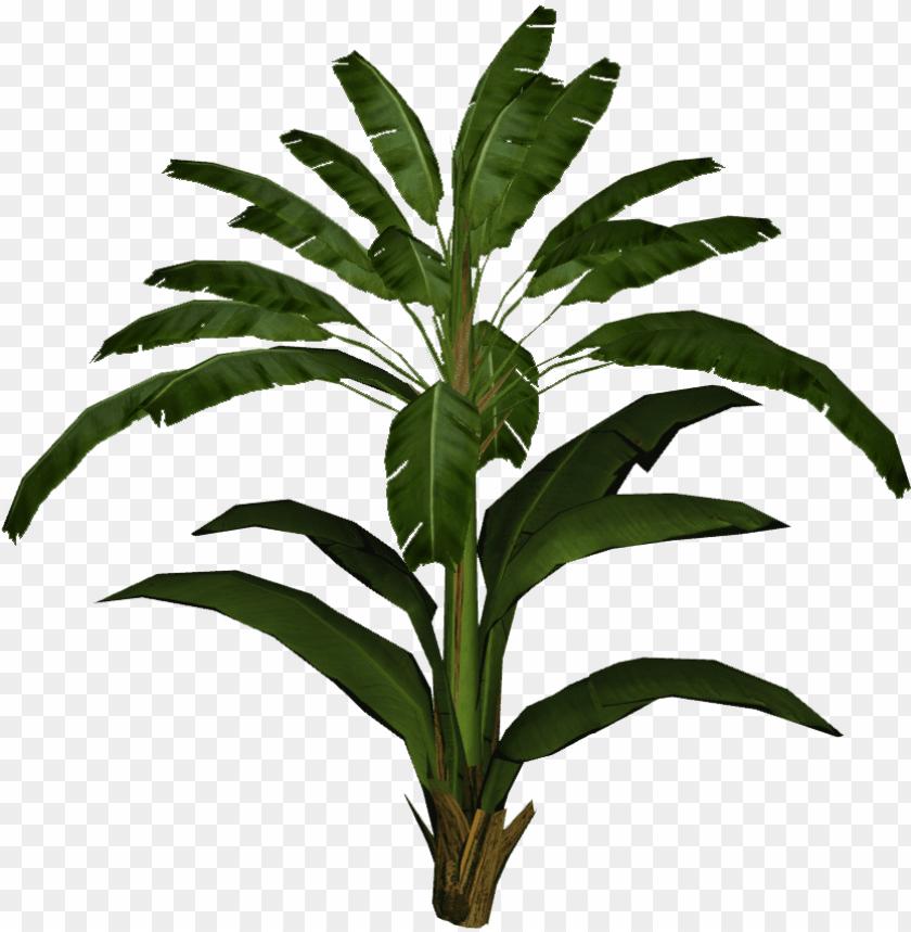 free PNG banana leaf palm - banana leaf plant PNG image with transparent background PNG images transparent