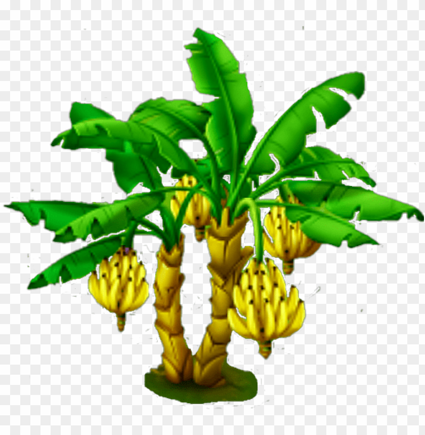 free PNG banana tree - name of plant and their parts that we eat PNG image with transparent background PNG images transparent