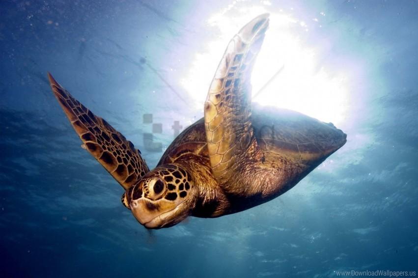 barrier reef, sea, swim, turtle