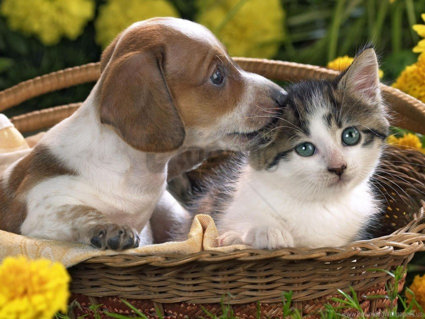 Basket Care Cat Dog Taking Wallpaper Background Best Stock Photos Toppng