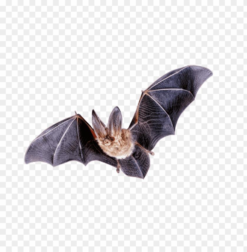 free PNG Download bat png images background PNG images transparent