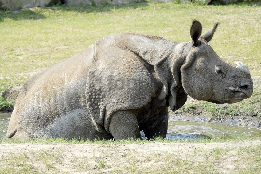 free PNG bath, grass, mud, puddle, rhino wallpaper background best stock photos PNG images transparent