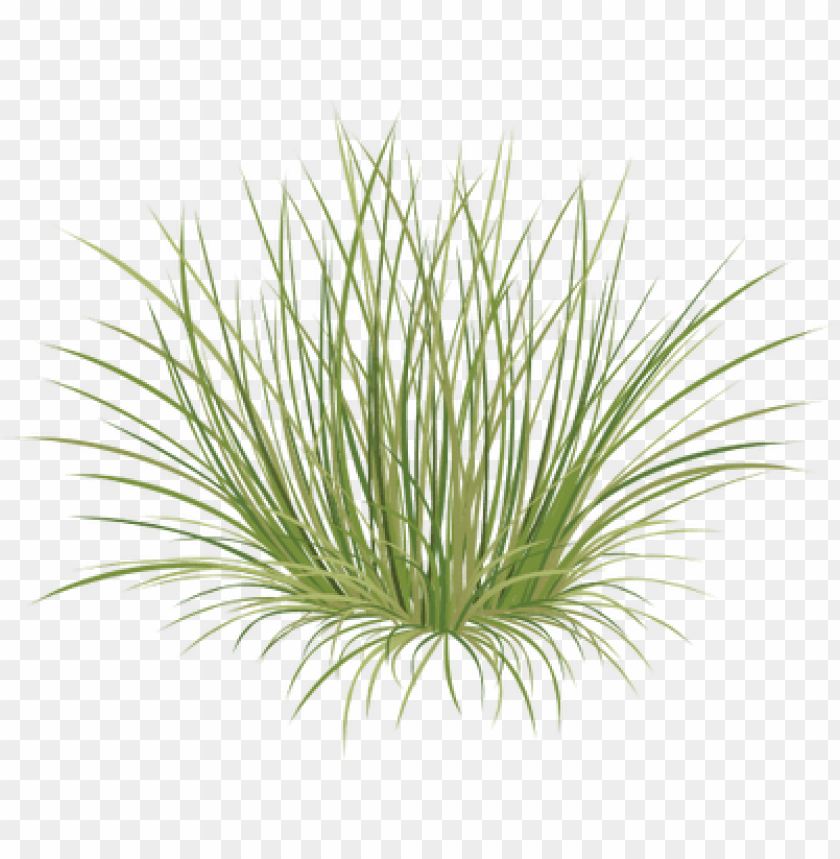 free PNG beach grass png - sweet grass PNG image with transparent background PNG images transparent
