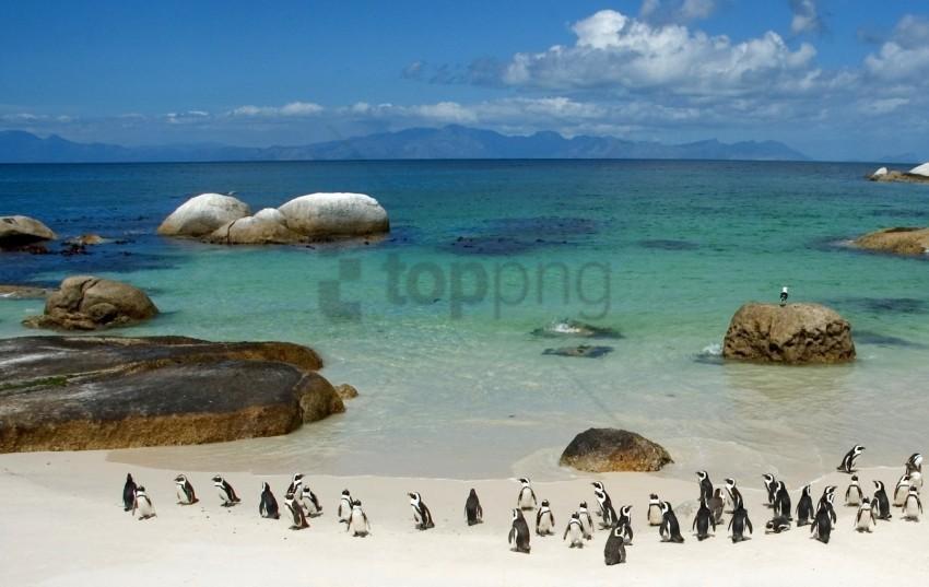free PNG beach, ocean, penguins, rocks, sand, sea, sky wallpaper background best stock photos PNG images transparent