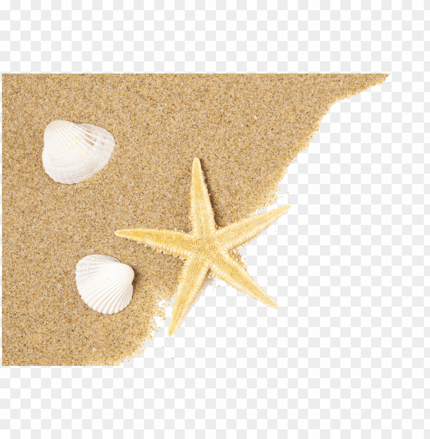 free PNG beach png - seashell starfish PNG image with transparent background PNG images transparent
