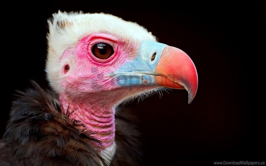 free PNG beak, bird, carrion bird, color, predator wallpaper background best stock photos PNG images transparent