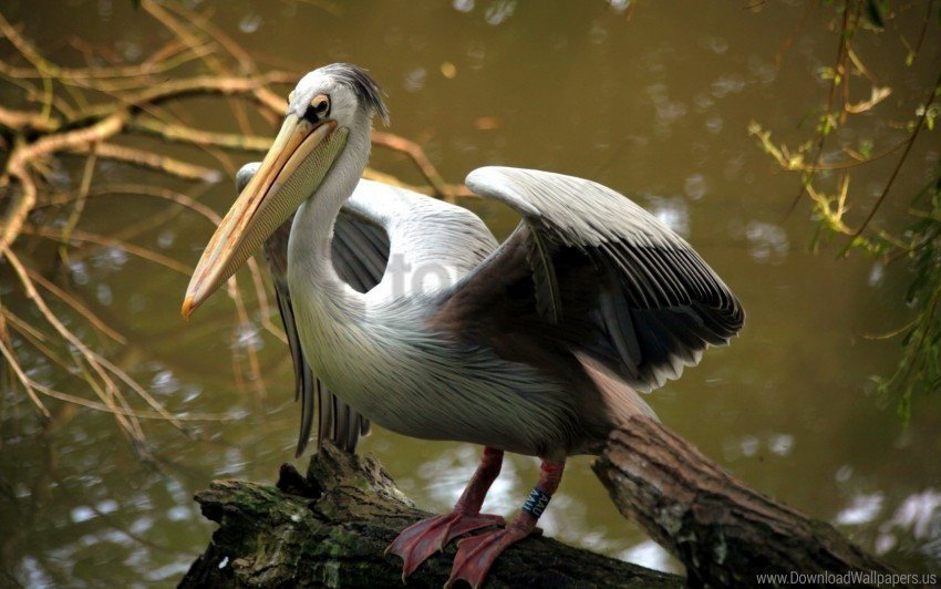 free PNG beak, bird, color, river wallpaper background best stock photos PNG images transparent