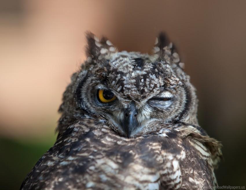 free PNG beak, bird, face, feathers, owl, predator, wink wallpaper background best stock photos PNG images transparent