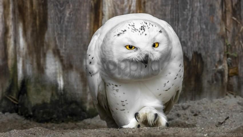 free PNG beak, owl, predator, yellow eyes wallpaper background best stock photos PNG images transparent