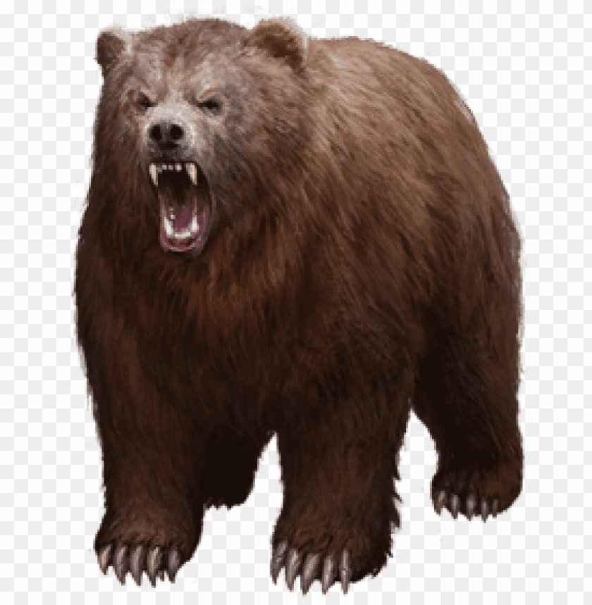 free PNG Download bear png images background PNG images transparent