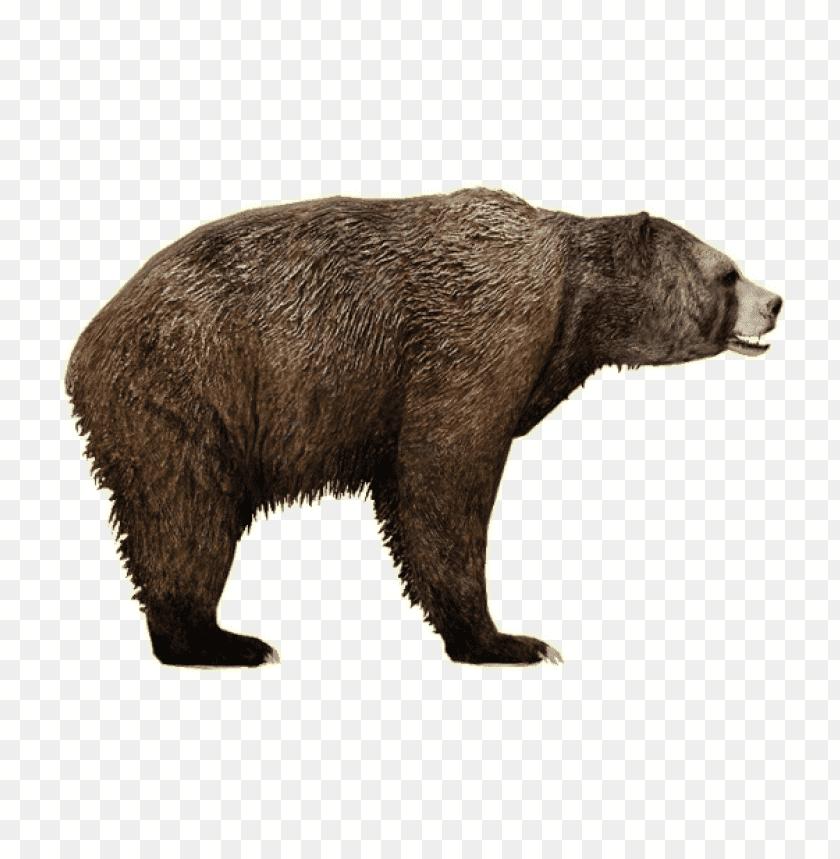 free PNG Download bear png images background PNG images transparent