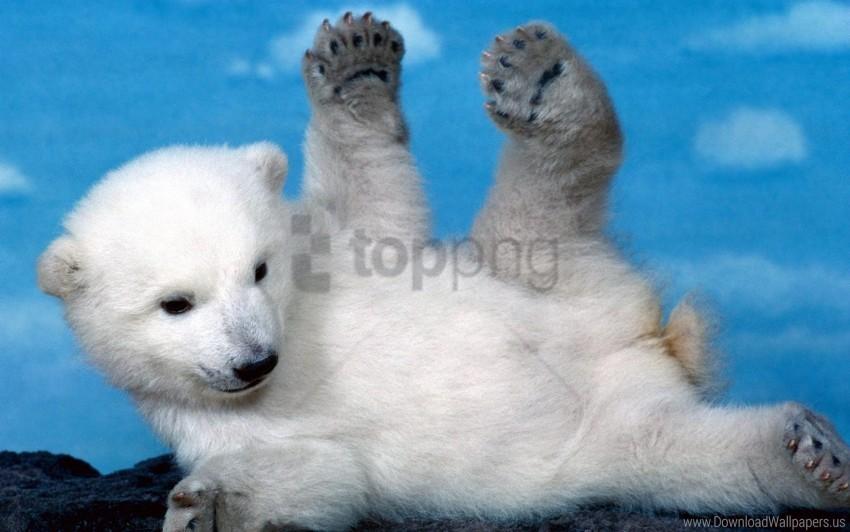free PNG bear, cub, legs, lying, playful, polar bear wallpaper background best stock photos PNG images transparent