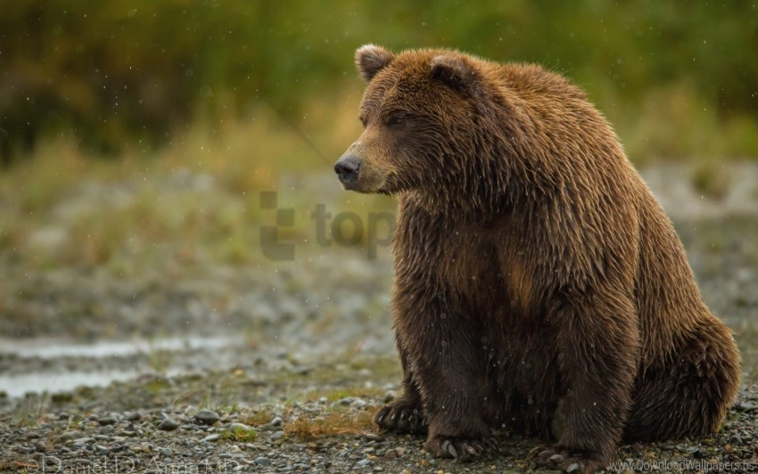free PNG bear, sitting, thick wallpaper background best stock photos PNG images transparent