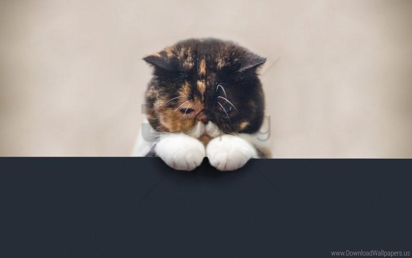 free PNG beautiful, cat, face, fat, legs, sad wallpaper background best stock photos PNG images transparent