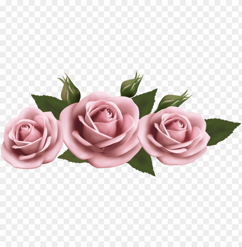 Beautiful Clipart Pink Rose Pink Roses Transparent Png Image