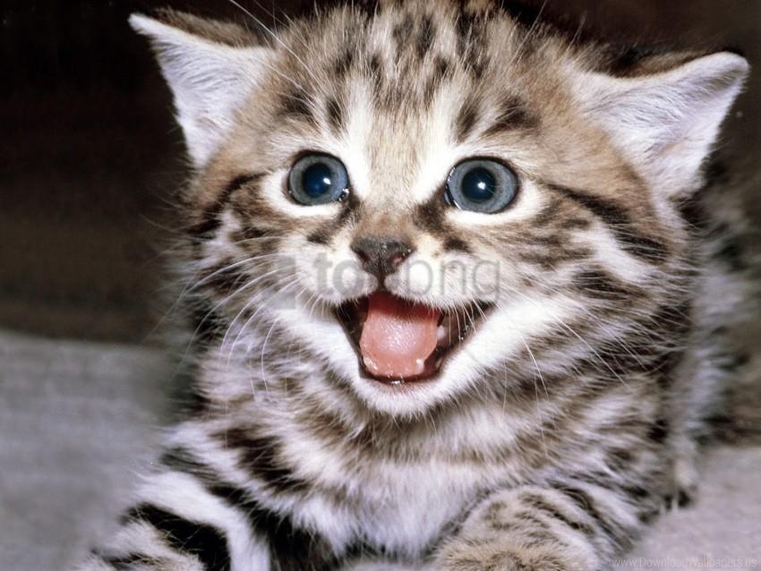 beautiful, crying, face, kitten