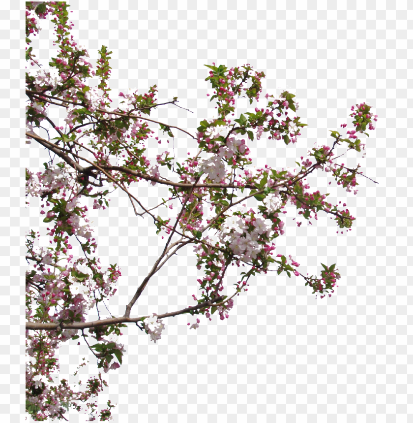 free PNG beautiful high definition close up peach tree peach - hausmodelle PNG image with transparent background PNG images transparent