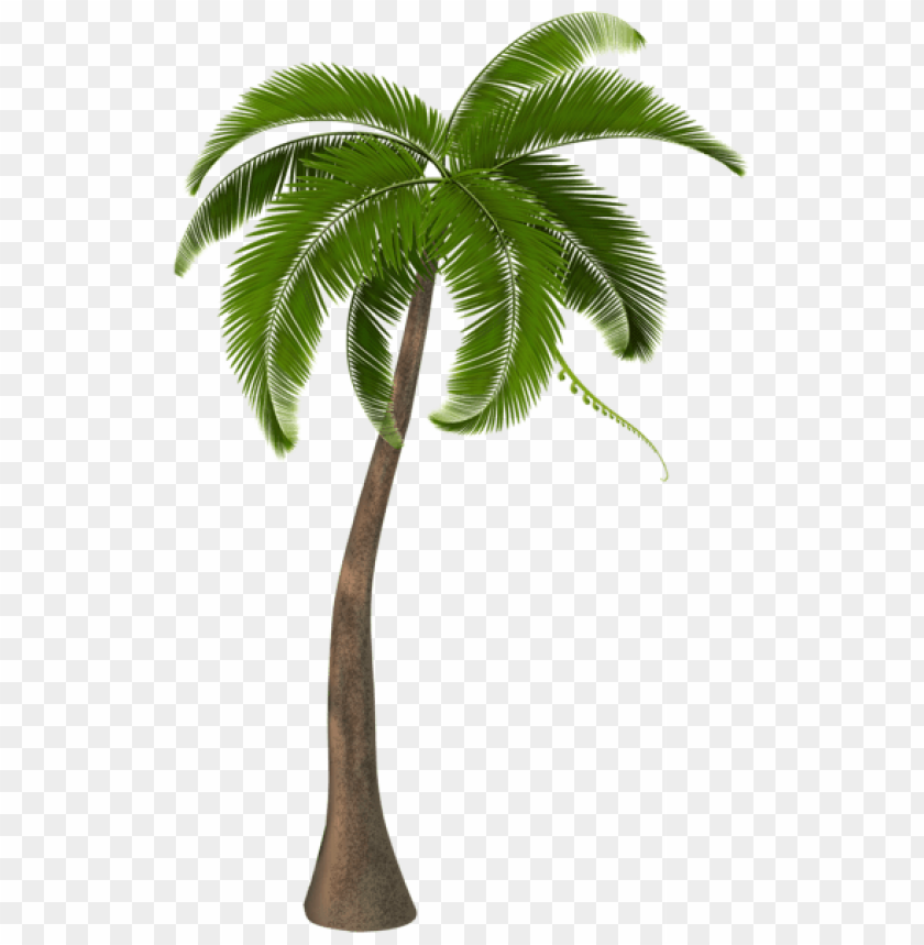 free PNG Download beautiful palm tree png images background PNG images transparent