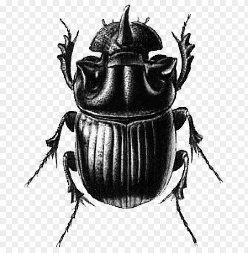 free PNG Download beetle black illustration png images background PNG images transparent