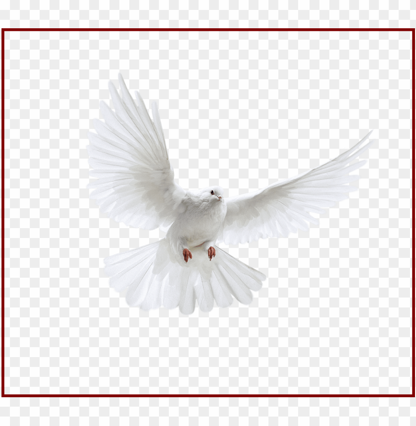 free PNG best holy spirit dove clip art of flying in front you - uçan beyaz güvercin PNG image with transparent background PNG images transparent