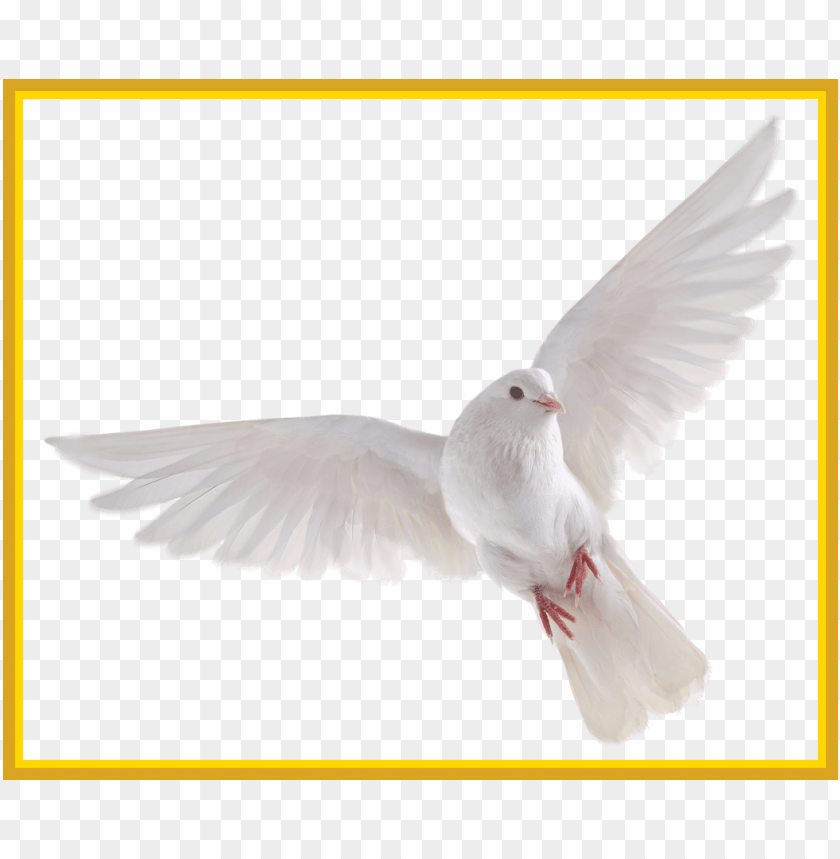 free PNG best holy spirit dove clip art of flying in front you - white dove no background PNG image with transparent background PNG images transparent