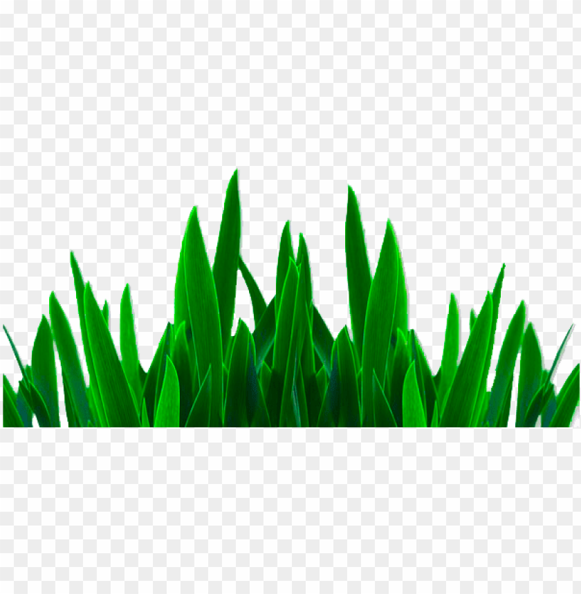 free PNG best png, editing png, grass png - png pictures hd photosho PNG image with transparent background PNG images transparent