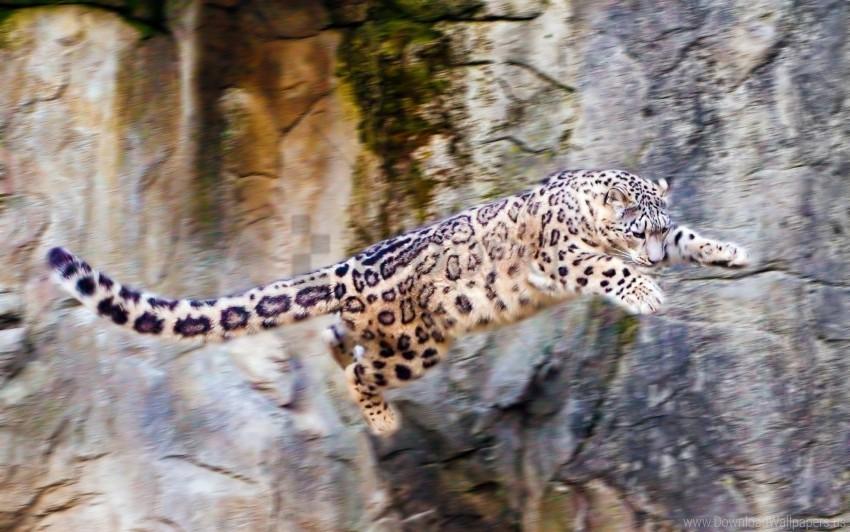 Big Cat Jump Rocks Snow Leopard Wallpaper Background Best Stock Photos Toppng