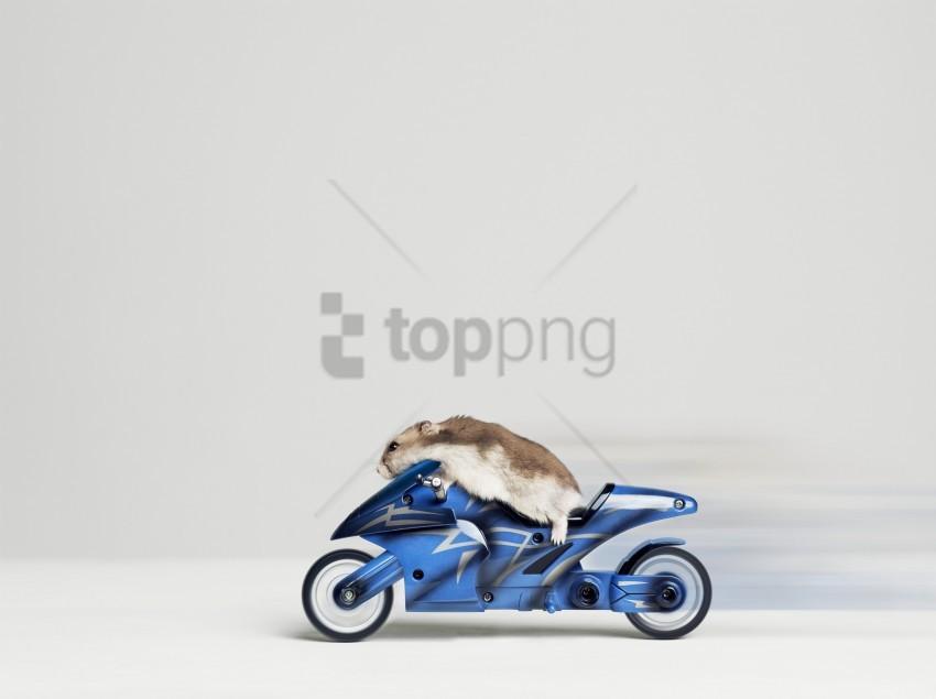 free PNG bike, hamster, rider wallpaper background best stock photos PNG images transparent