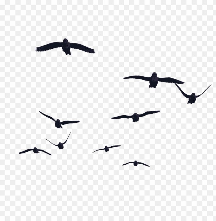 free PNG Download bird png images background PNG images transparent