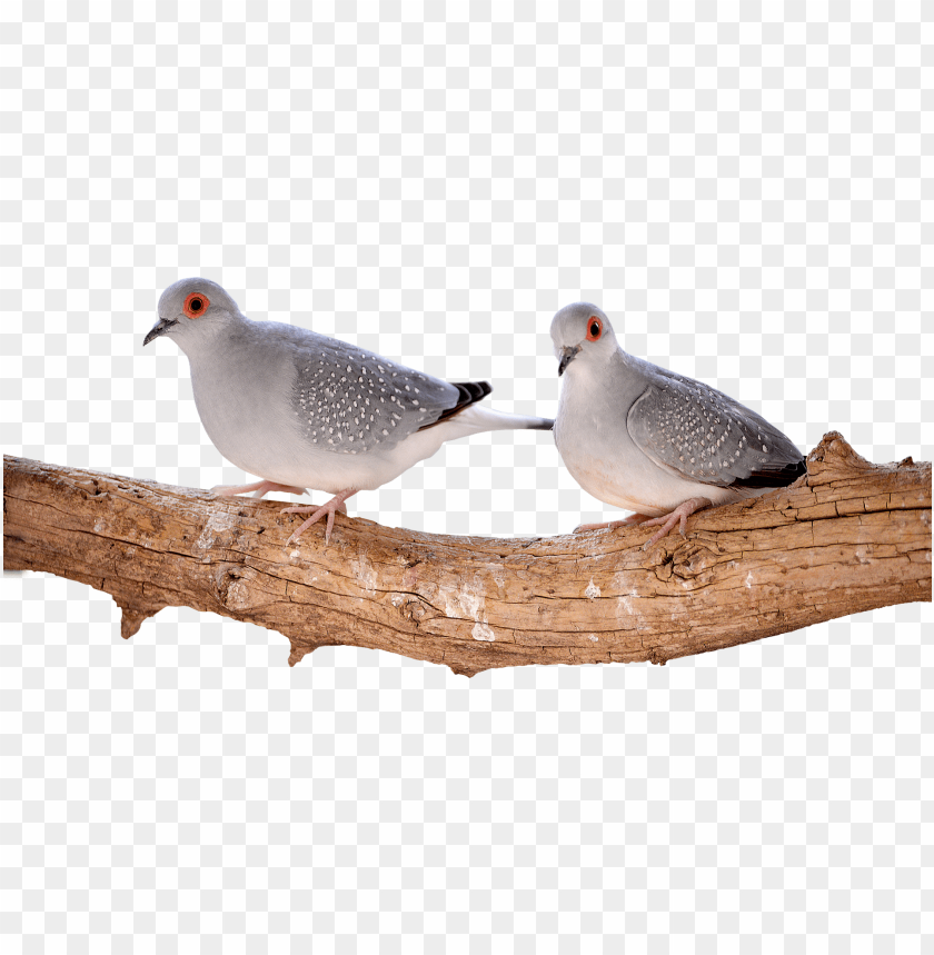 free PNG bird PNG image with transparent background PNG images transparent