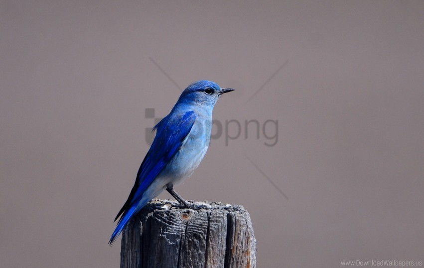 free PNG bird, blue bird, color, sitting, tree stump, wings wallpaper background best stock photos PNG images transparent