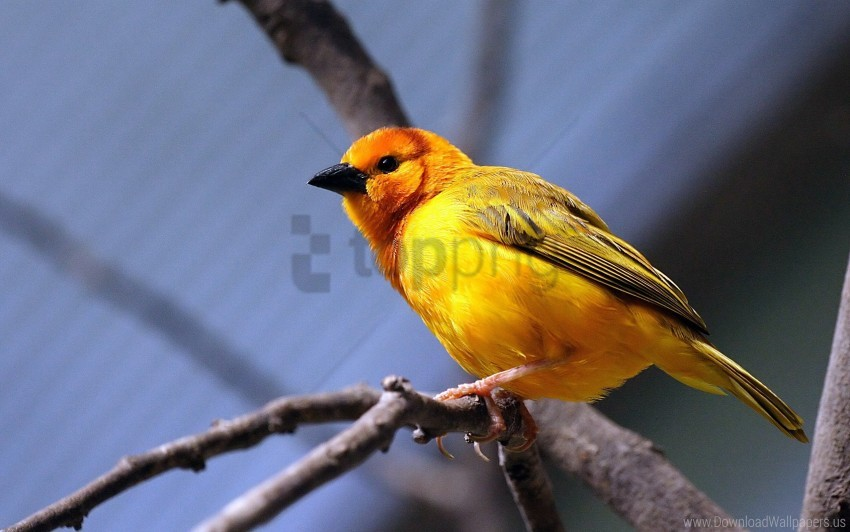 free PNG bird, branch, bright color, sit, yellow bird wallpaper background best stock photos PNG images transparent