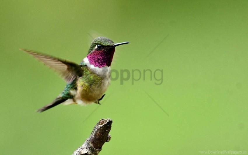 free PNG bird, branch, flap, flight, hummingbird, wings wallpaper background best stock photos PNG images transparent