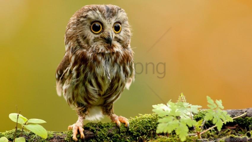 free PNG bird, branch, owl, owlet, rock wallpaper background best stock photos PNG images transparent