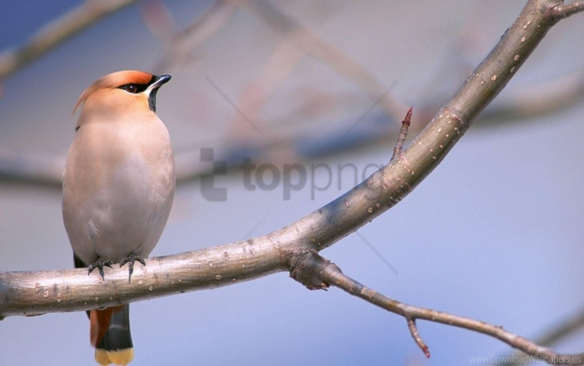 free PNG bird, branches, tree wallpaper background best stock photos PNG images transparent