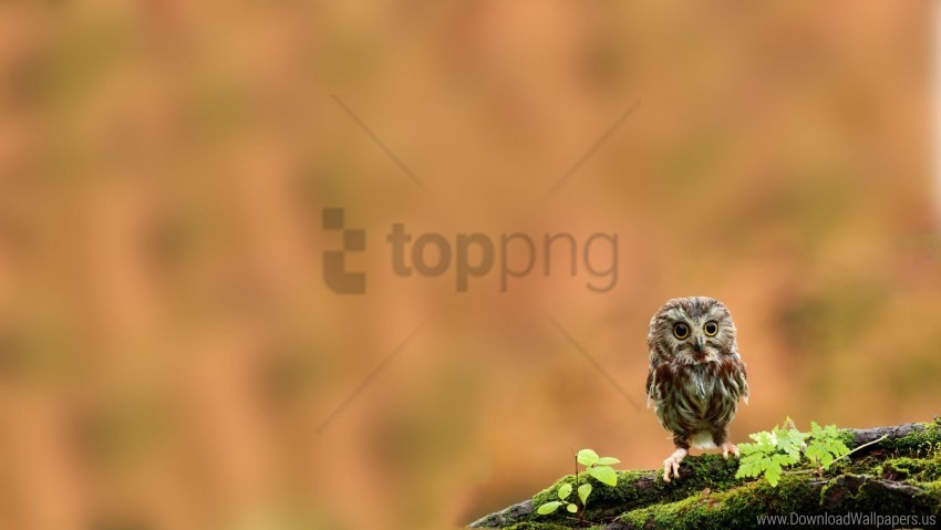 free PNG bird, chick, moss, owl, owlet, twig wallpaper background best stock photos PNG images transparent
