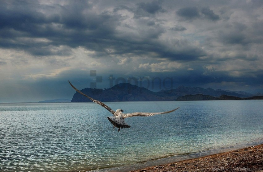 bird, coast, flap, flight, mountains, predator, sea, wings wallpaper background best stock photos@toppng.com