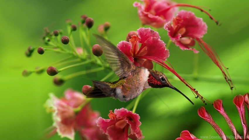 free PNG bird, color, flap, flight, flowers, hummingbird, twigs, wings, wood wallpaper background best stock photos PNG images transparent